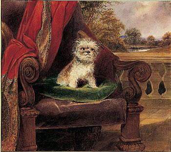 Pamina, cane di Maria Luigia