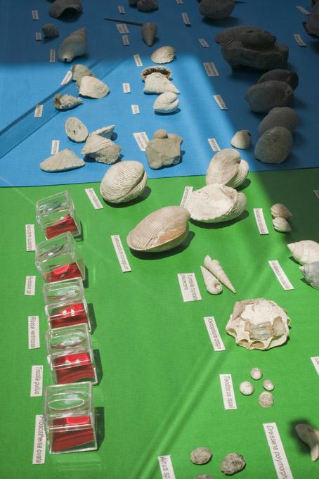 vetrina fossili foto Enrico Turillazzi